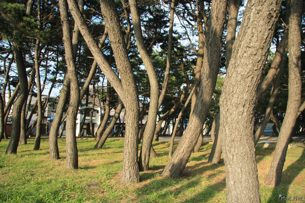 trees in hakodate park
