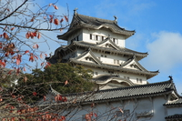 himeji castle and the autumn leaves
