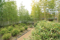 take-no-niwa - bamboo garden