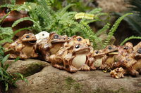 a tribe of toads