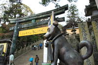 view--puppy of kompira shrine
