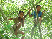 tree boys Pakbeng, South East Asia, Laos, Asia