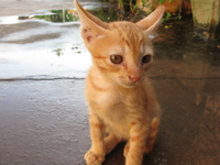 sadness of kitty Luang Prabang, Vientiane, South East Asia, Laos, Asia