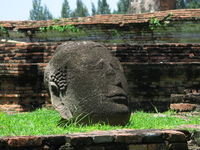 fallen buddha head of wat maha that Ayutthaya, Central Thailand, Thailand, Asia