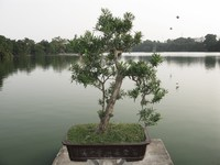 tortoise tower - bonsai Halong Bay City, Ha Noi, South East Asia, Vietnam, Asia