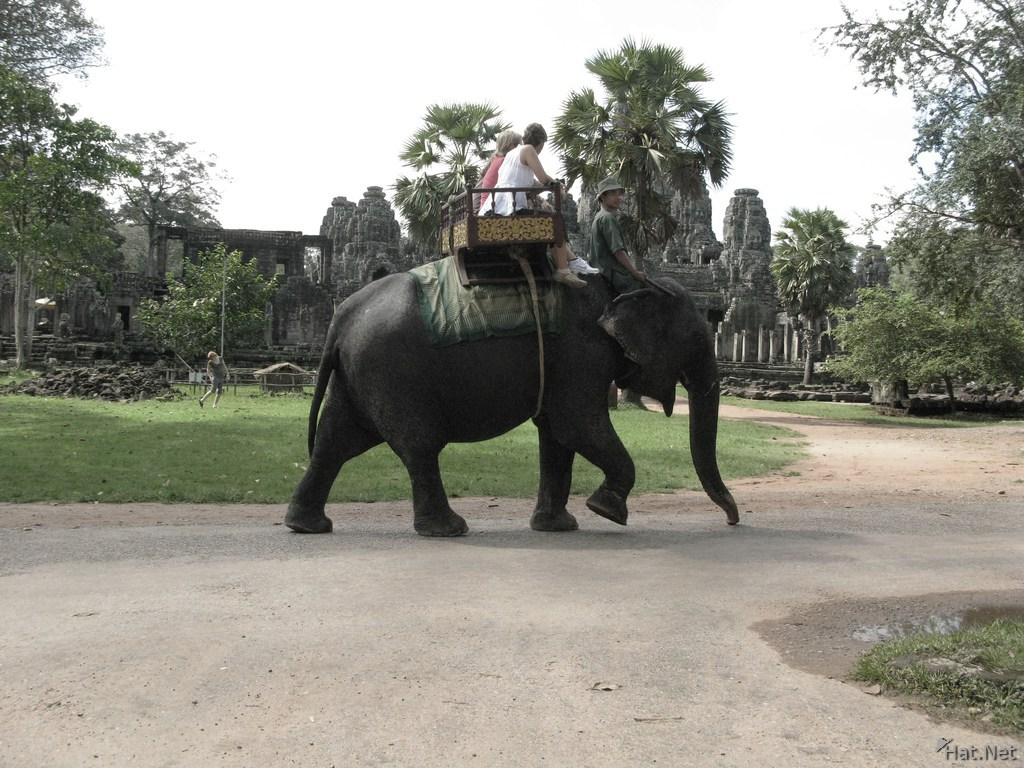 elephant in front of bayon temple