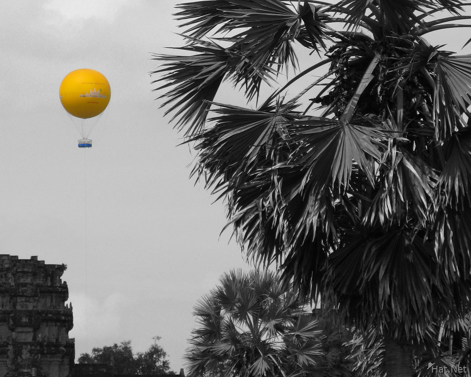 angkor balloon and palm tree
