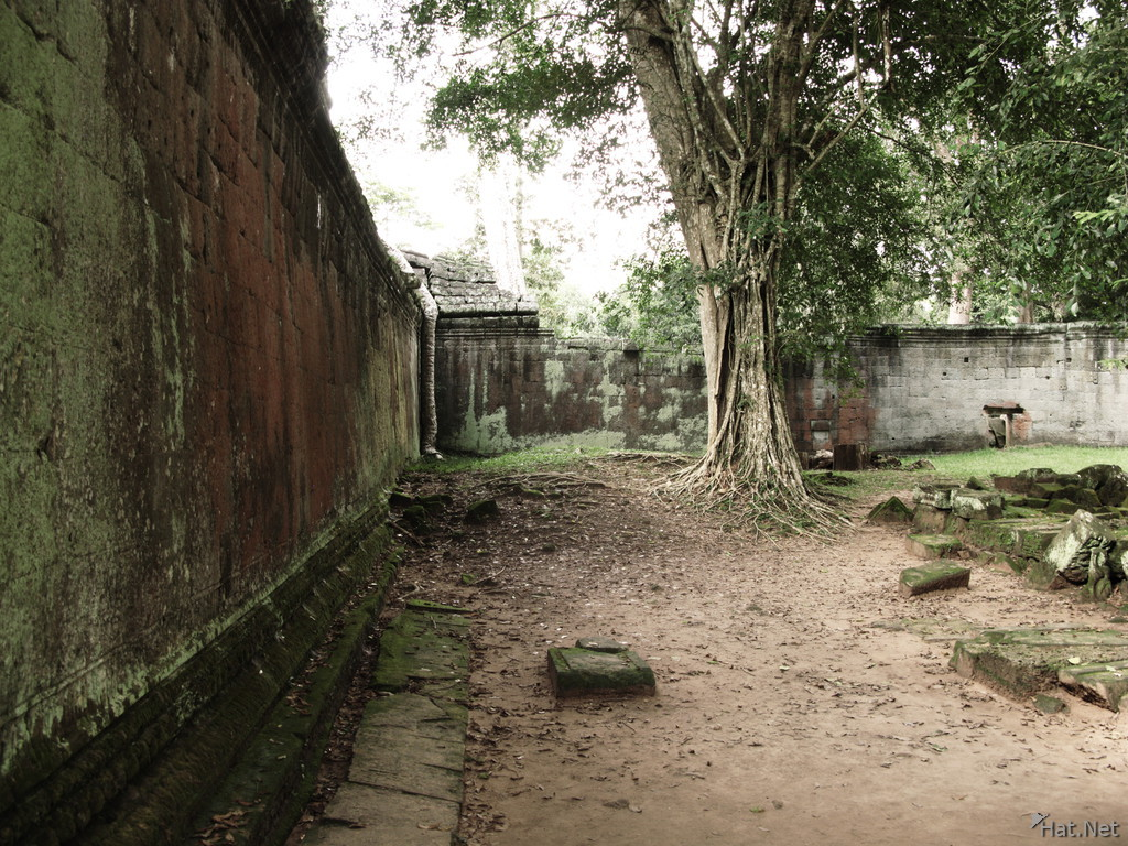 ta prohm court yard