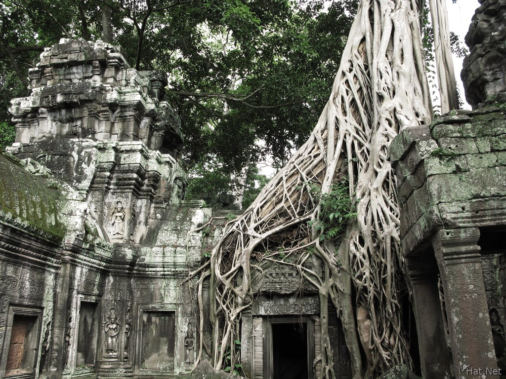 view--ta prohm strangler fig trees