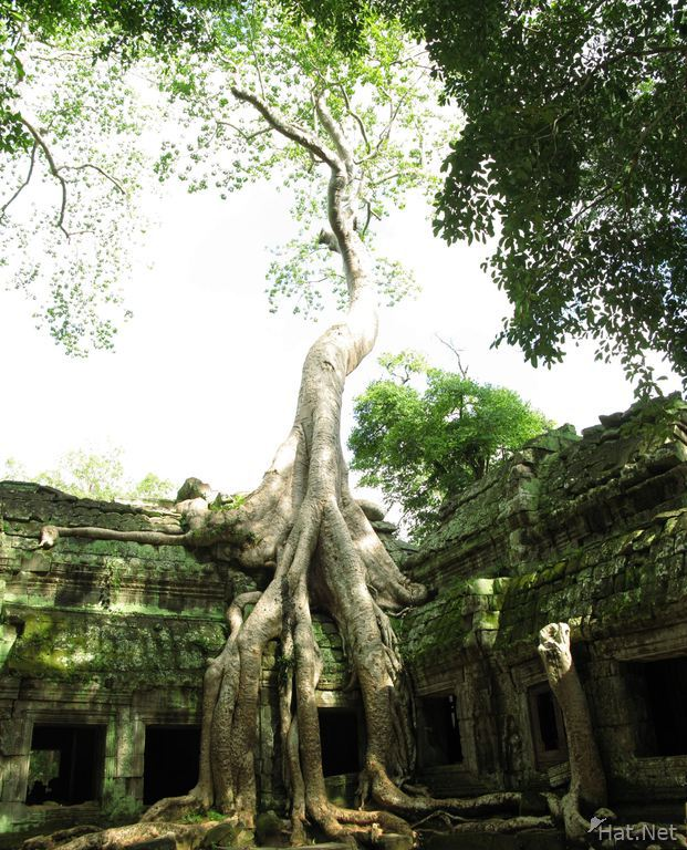 view--taprohm tree