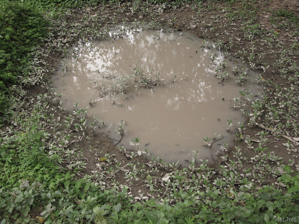 mud puddle of the dead