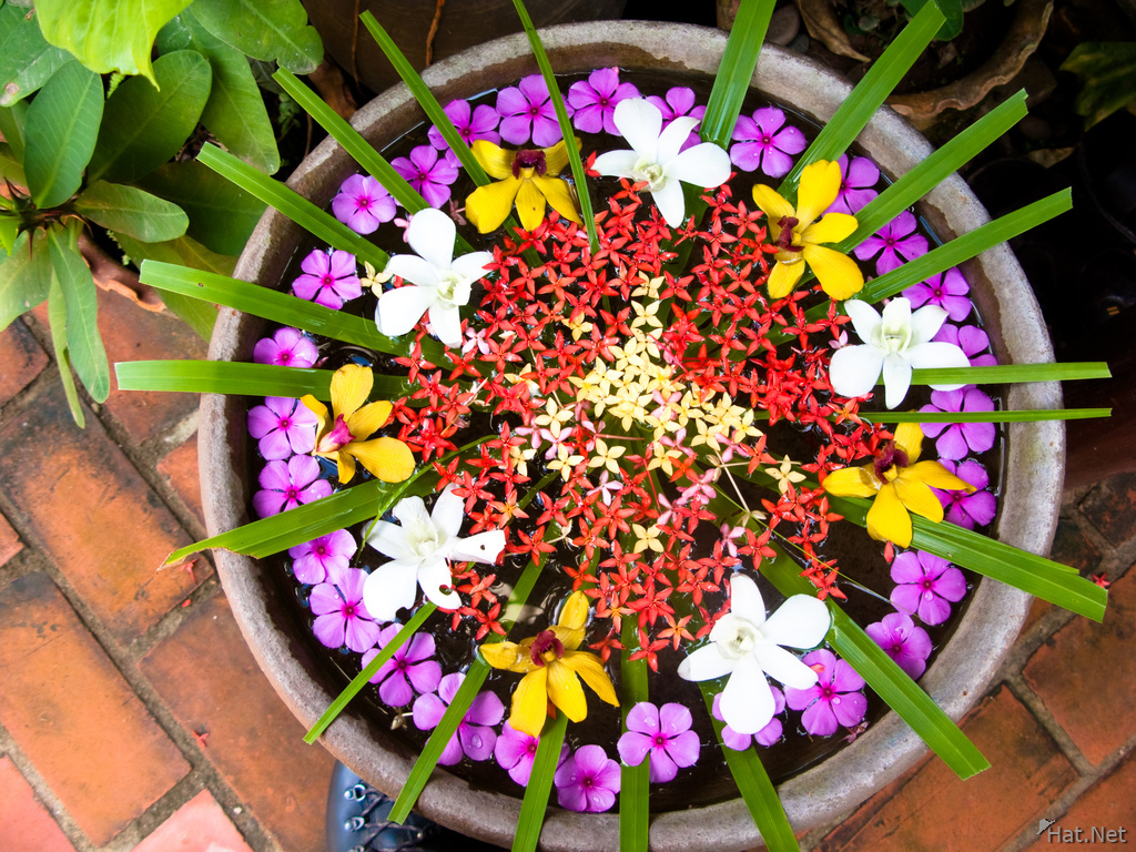 view--flower pot of luang prabang
