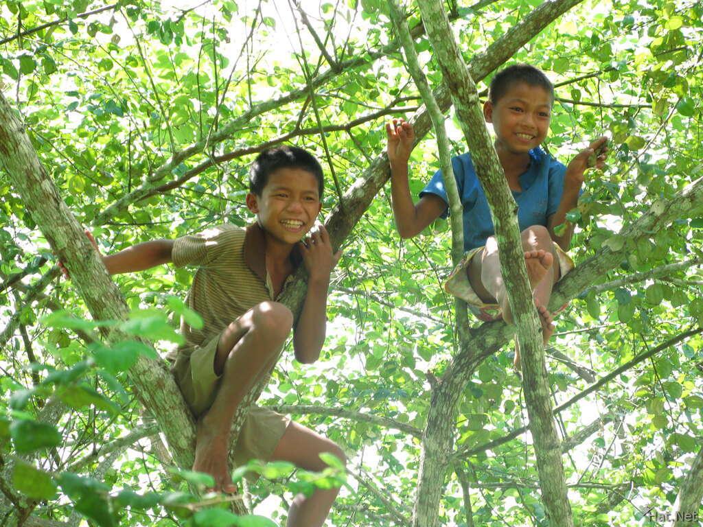 Tree Boys Slow Boat Indo China # Bois En Chaene