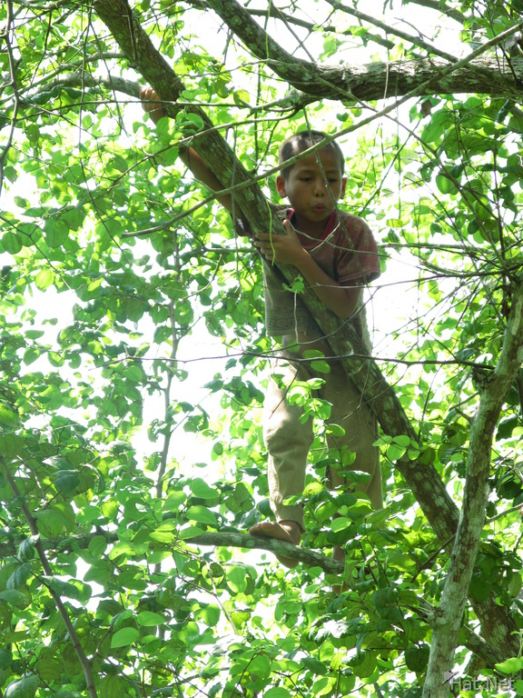 laos boy on tree