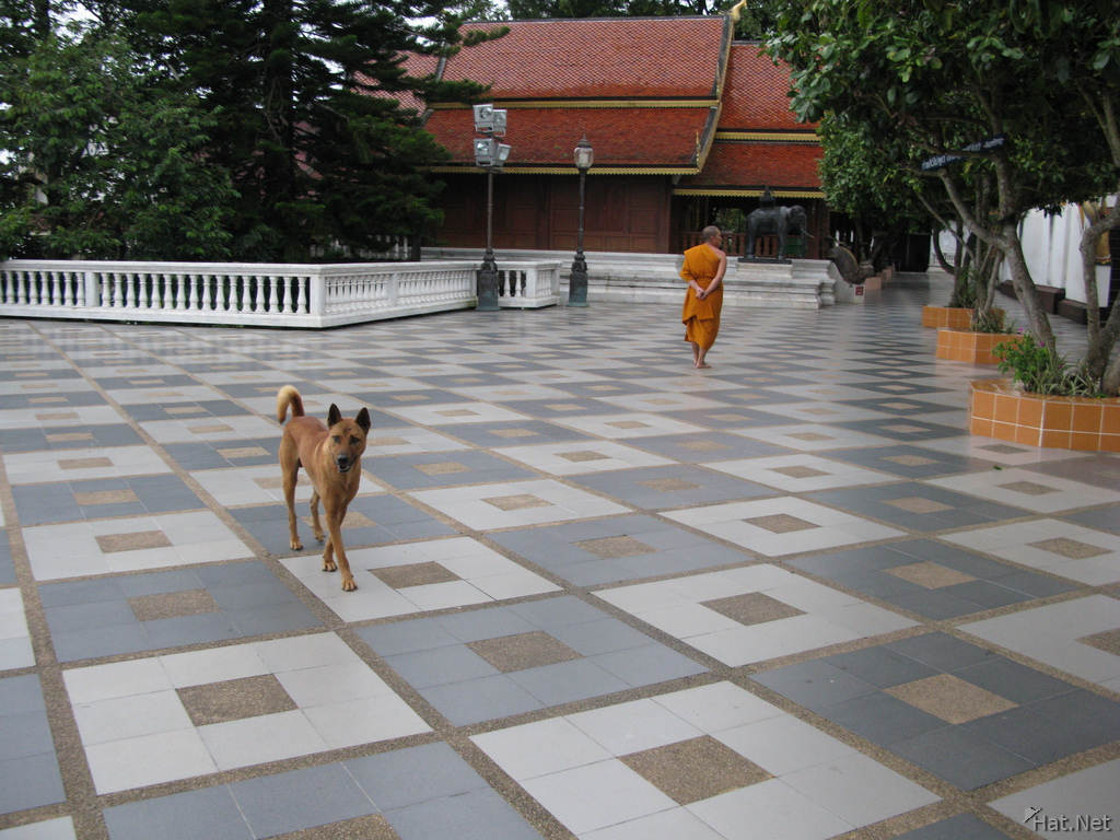 view--monk and dog in doi suthep