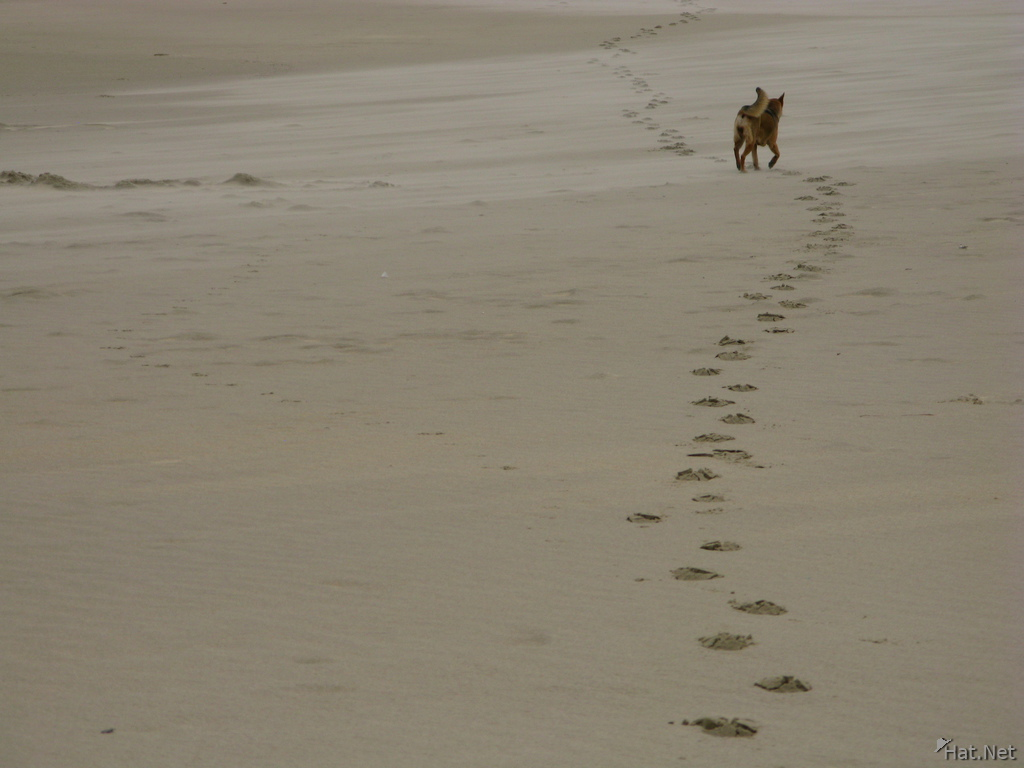 trail of dog