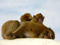 20101107113557_view--filial_piety_of_monkeys
