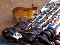 view--cat stealing sunglasses Marrakech, Imperial City, Morocco, Africa