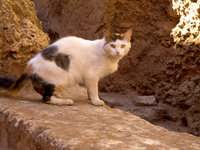 cat in guest house Marrakech, Imperial City, Morocco, Africa