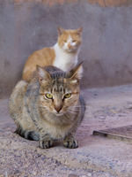 20101017171535_view--cats_near_hotel_amlal