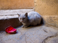 view--cat of meknes Meknes, Imperial City, Morocco, Africa