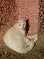 20101105113600_view--cat_of_tangier