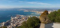 20101106155610_view--gibraltar_monkey