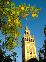 view--giralda Cadiz, Seville, Andalucia, Spain, Europe