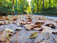 autumn leaves before washington irving Granada, Andalucia, Spain, Europe