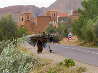 women carrying firewoods Ait Arbi, Dades Valley, Morocco, Africa
