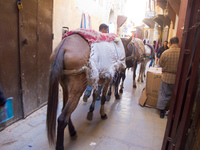 horse handlers Fez, Imperial City, Morocco, Africa