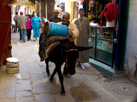 donkey carrying propane gas tank Fez, Imperial City, Morocco, Africa