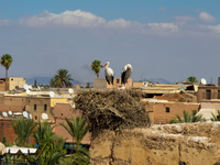 stork nest Marrakech, Imperial City, Morocco, Africa
