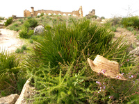 volubilis vacation hat Meknes, Moulay Idriss, Imperial City, Morocco, Africa