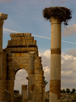 volubilis stork nest column Meknes, Moulay Idriss, Imperial City, Morocco, Africa
