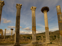 volubilis roman columns Meknes, Moulay Idriss, Imperial City, Morocco, Africa