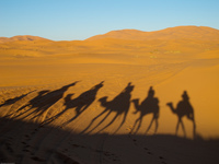 shadow of camel train Merzouga, Sahara, Morocco, Africa