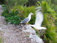 20101106174428_dynamic_sea_gull