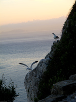 20101106181042_view--seagull_of_gibraltar