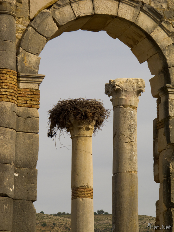 view--columns of volubilis