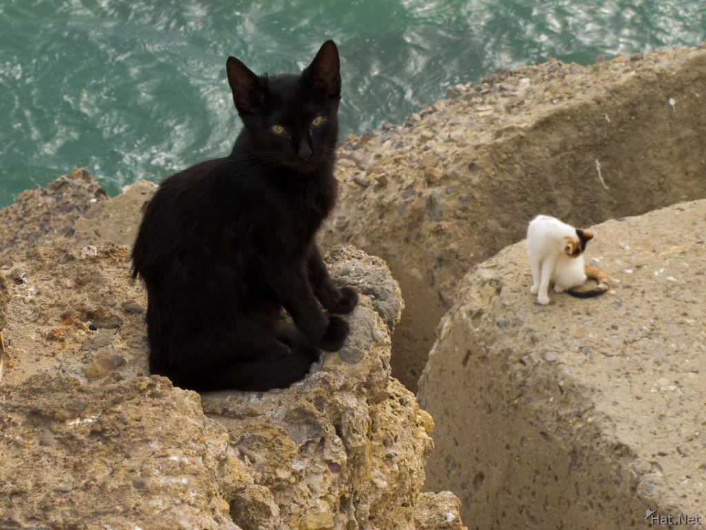 view--cat near cadiz cathedral
