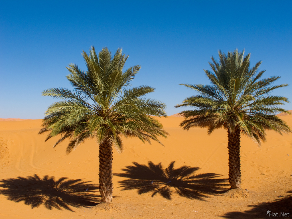 view--palm trees in sahara