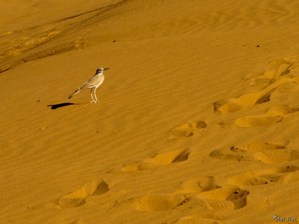 view--desert bird