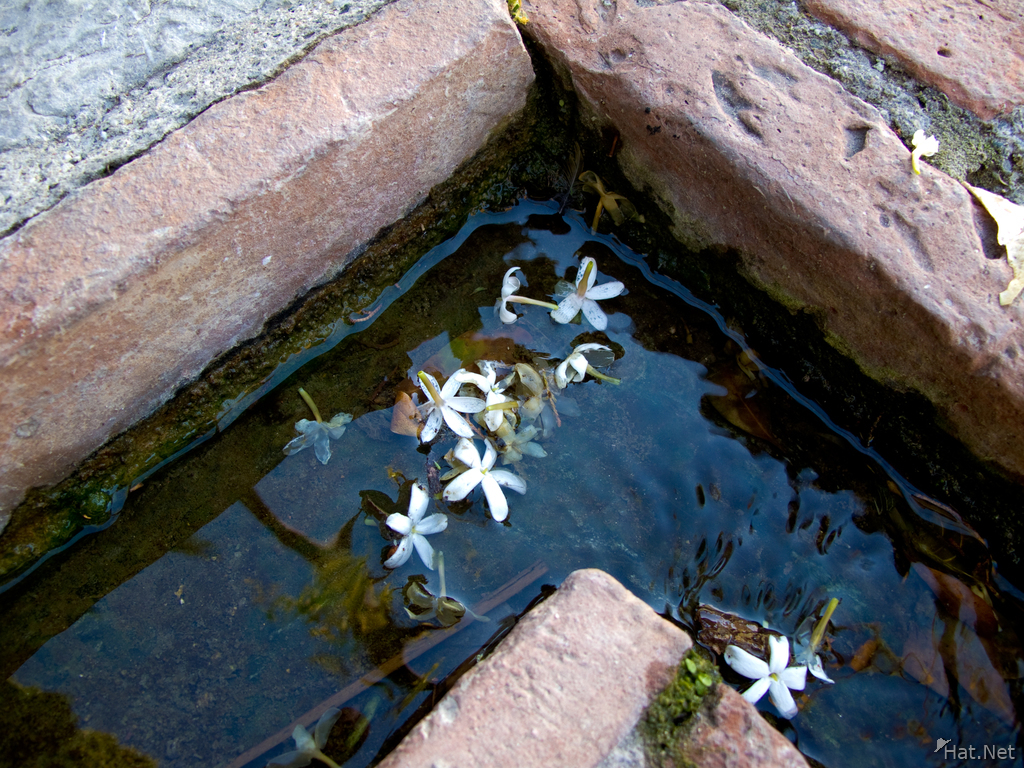 view--drowned flowers