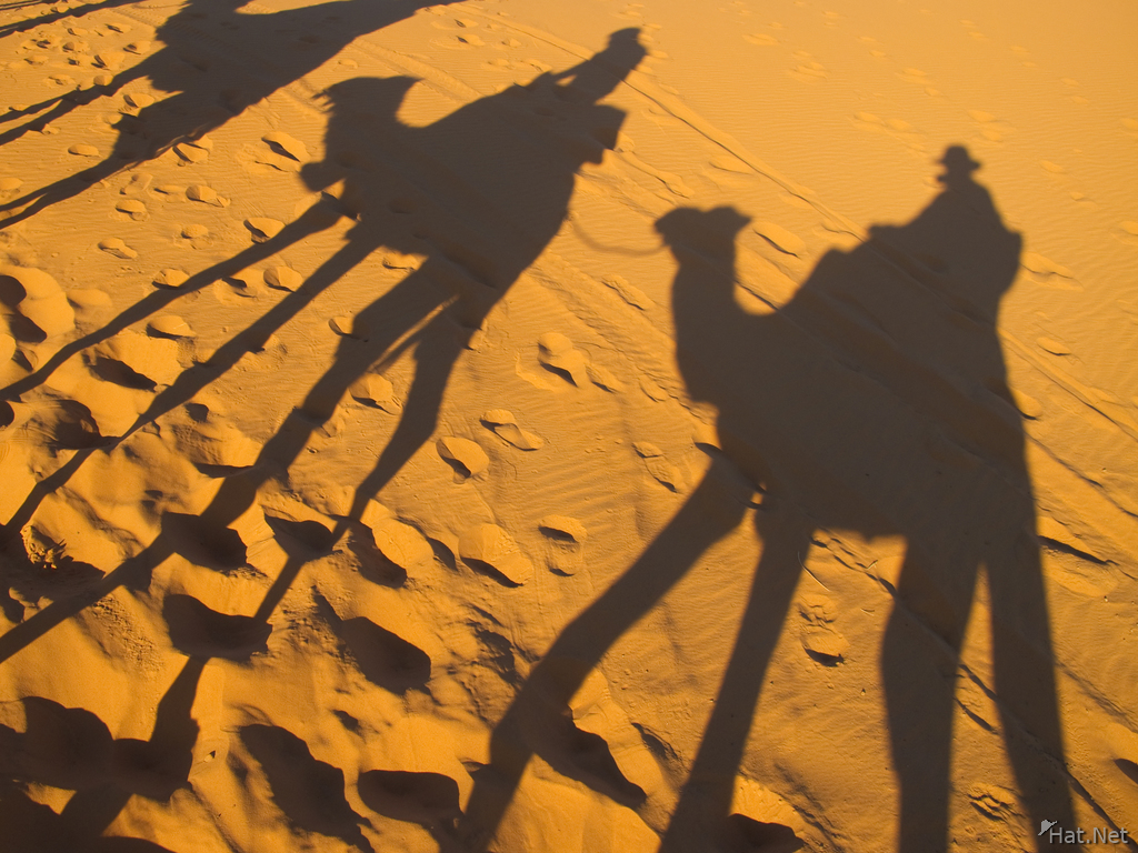 view--shadows of camel riders