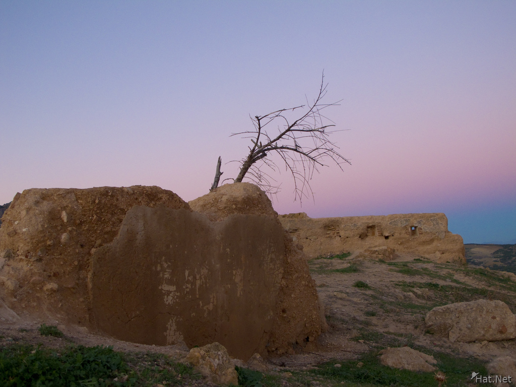 merenid tomb tree
