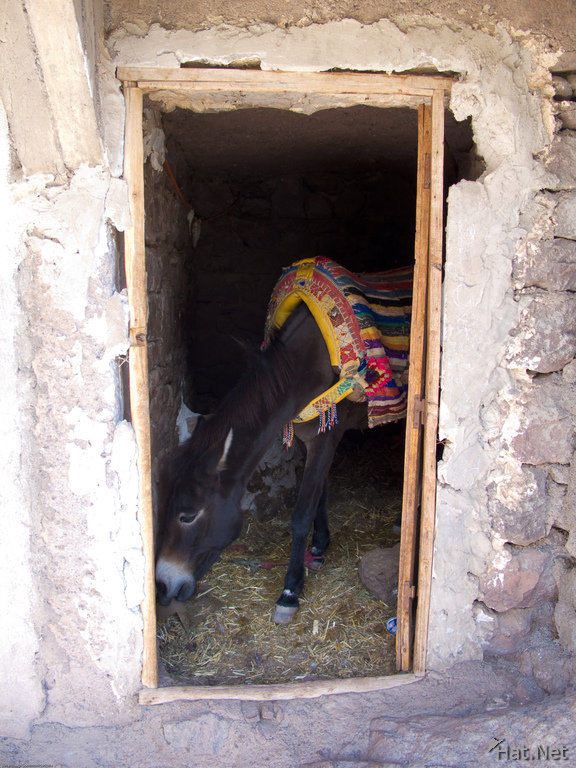 donkey in hut