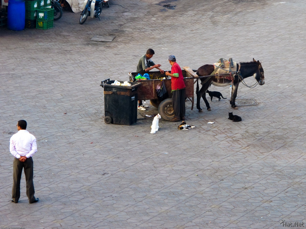 marrakech donkey cleaning unit