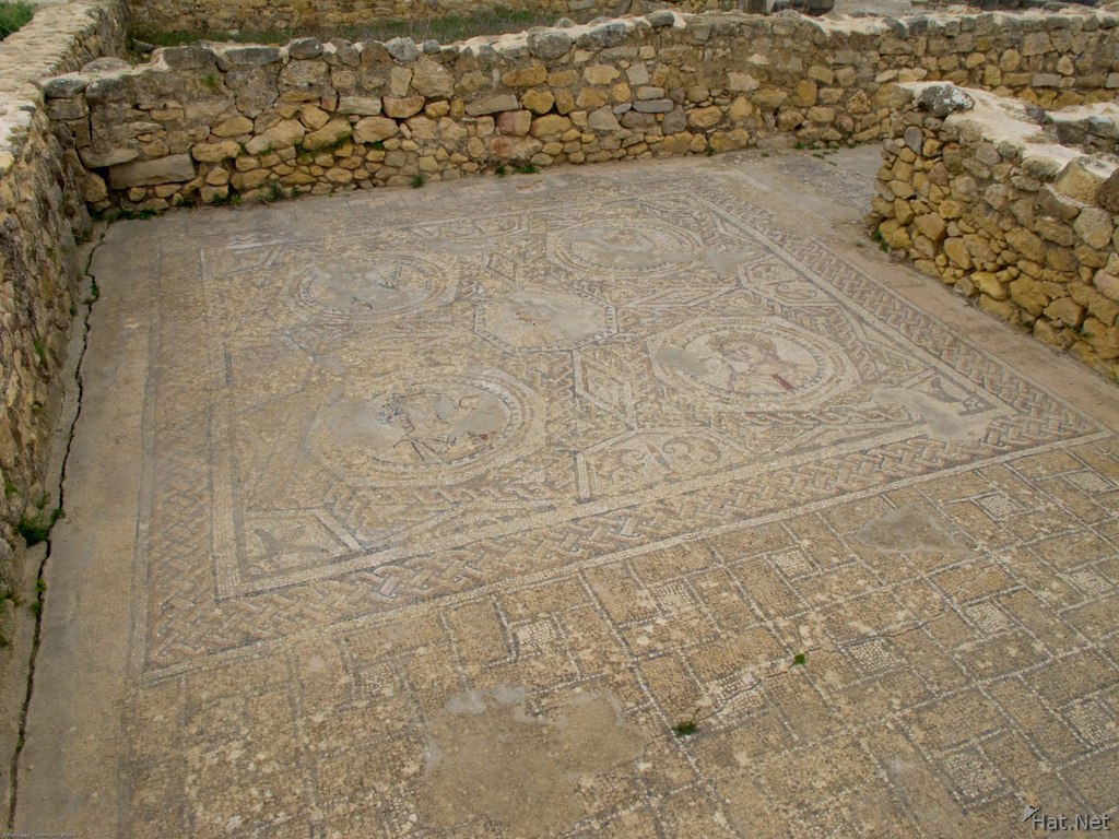 fish mosaic in house of venus