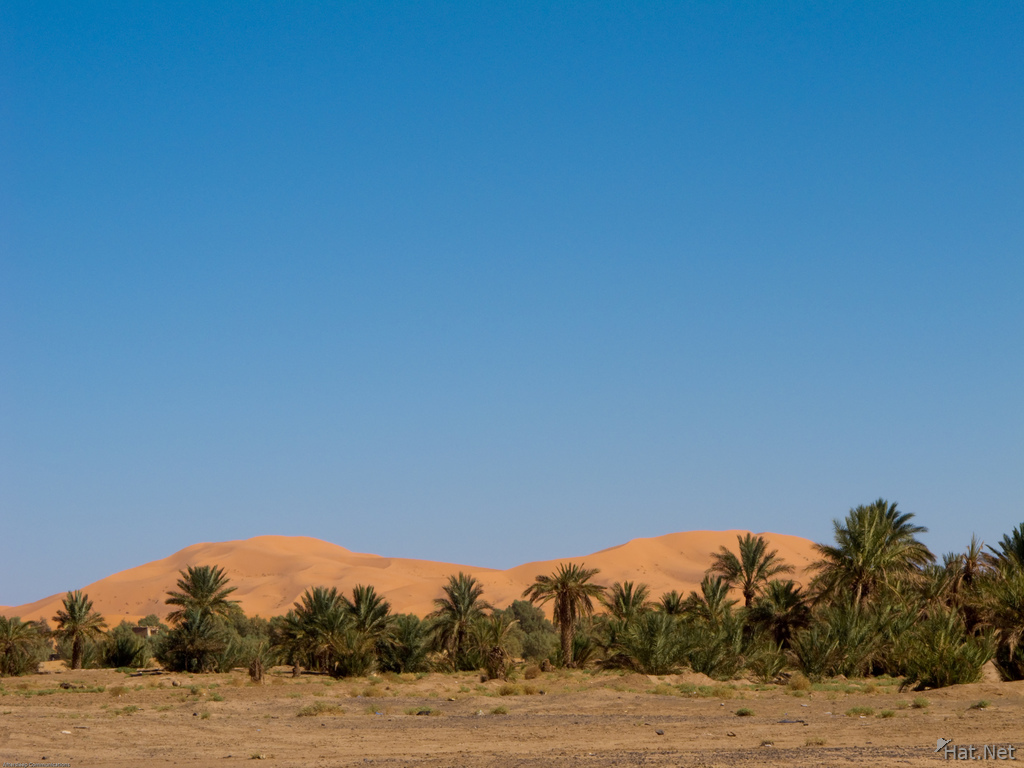 merzouga desert palm trees